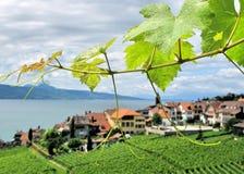 Vigne di Famouse in Lavaux Fotografie Stock