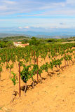 Vigne di Languedoc Roussillon intorno a Beziers Herault Francia Fotografie Stock