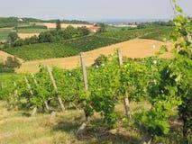 Vigne di Monferrato Fotografie Stock Libere da Diritti