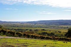 Vigne di Napa Valley Fotografia Stock