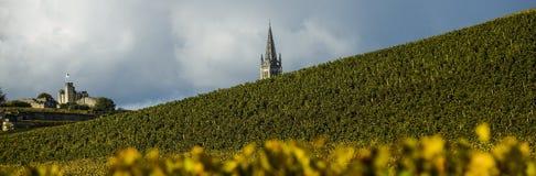 Vigne di Saint Emilion, Bordeaux, Francia Fotografia Stock Libera da Diritti