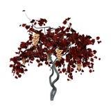 vigne du rendu 3D sur le blanc Images libres de droits