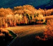 Vigne durante l'autunno, Langhe, Italia Fotografia Stock