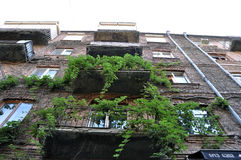 Vigne e balconi verdi Fotografie Stock