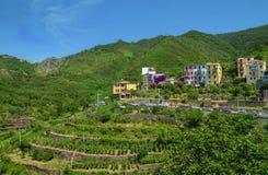 Vigne e case in Corniglia, Cinque Terre fotografia stock