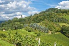 Vigne e paesaggio in Gengenbach Immagini Stock