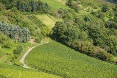 Vigne e paesaggio in Gengenbach Fotografia Stock Libera da Diritti