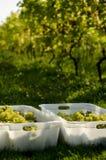 Vigne en automne Photographie stock libre de droits