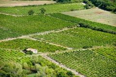 Vigne en France Photos stock