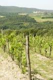 Vigne en Italie Photographie stock