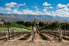 Vigne en vallée de Gibbston Photographie stock libre de droits