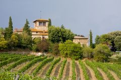 Vigne et établissement vinicole photographie stock libre de droits