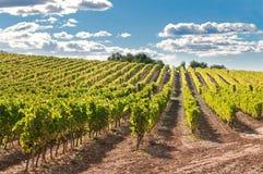 Vigne et côtes, Espagne photos stock