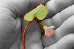 Vigne et fleur dans ma main image stock