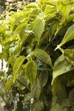 Vigne feuillue sous le Sun Photographie stock libre de droits