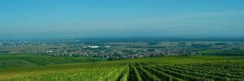 Vigne française image stock