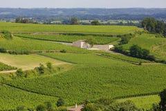 Vigne française Photographie stock