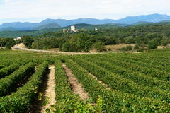 Vigne in Francia del sud Fotografia Stock