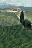 Vigne italienne Photos libres de droits
