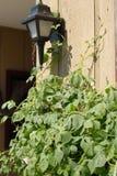 vigne légère de porche Photo stock