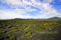 Vigne a Lanzarote spagna Fotografia Stock