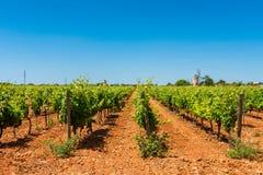 Vigne in Mallorca centrale Spagna Fotografia Stock Libera da Diritti