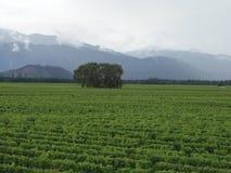 Vigne - Marlborough Ze neuf Photographie stock libre de droits