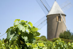 Vigne, Moulin un évent, de France. Photo stock