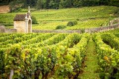 Vigne nei les Beaune di Savigny, vicino a Beaune, Borgogna, Francia fotografie stock libere da diritti