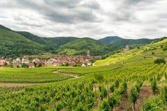 Vigne nel villaggio di Kaysersberg nell'Alsazia, Francia Fotografia Stock Libera da Diritti