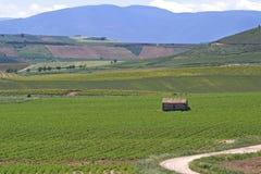 Vigne nella campagna di La Rioja, Spagna immagini stock libere da diritti