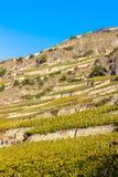 Vigne nella regione di Sion Fotografia Stock Libera da Diritti