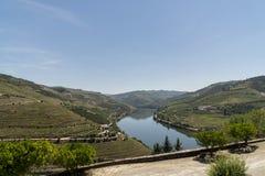 Vigne nella valle del fiume il Duero, Portogallo immagine stock