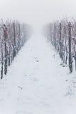 Vigne nevicate nella nebbia fotografia stock libera da diritti