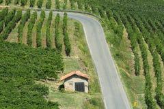 Vigne in Oltrepo Pavese (Italia) Fotografia Stock Libera da Diritti