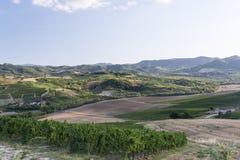 Vigne in Oltrepo Pavese (Italia) Fotografie Stock