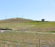 Vigne organiche in Italia Stagione primaverile, giorno soleggiato Iarde della vite fotografie stock