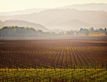 Vigne, pays de vin de Napa Valley, la Californie Images stock