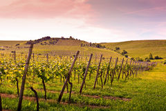 vigne proche allemande de fleuve de rhein photographie stock