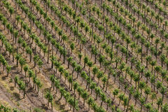 vigne proche allemande de trier la plus ancienne de ville Photographie stock