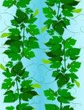 Vigne sans joint Image libre de droits