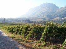 Vigne Stellenbosch d'automne Images libres de droits