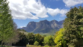 Vigne Sudafrica di Cape Town Fotografie Stock Libere da Diritti