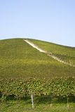 Vigne sulle colline di Langhe Fotografia Stock