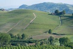 Vigne sulle colline di Langhe, Italia Immagini Stock