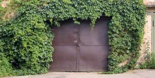 Vigne sur la porte de garage Photos libres de droits