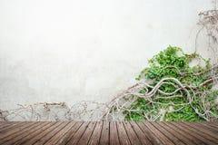 Vigne sur le plancher de mur en béton et en bois Photographie stock