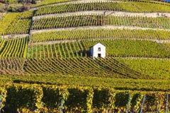 Vigne, Svizzera Fotografia Stock Libera da Diritti