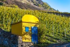 Vigne, Svizzera Immagini Stock