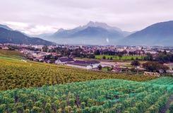 Vigne svizzere con le montagne Fotografia Stock Libera da Diritti
